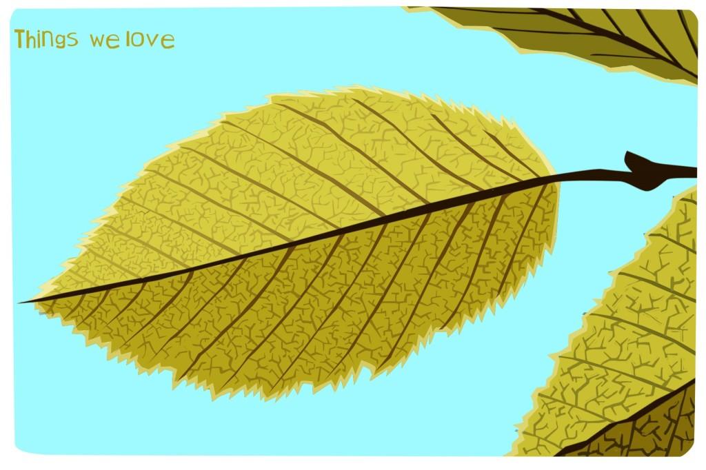 Beech leaf illustration