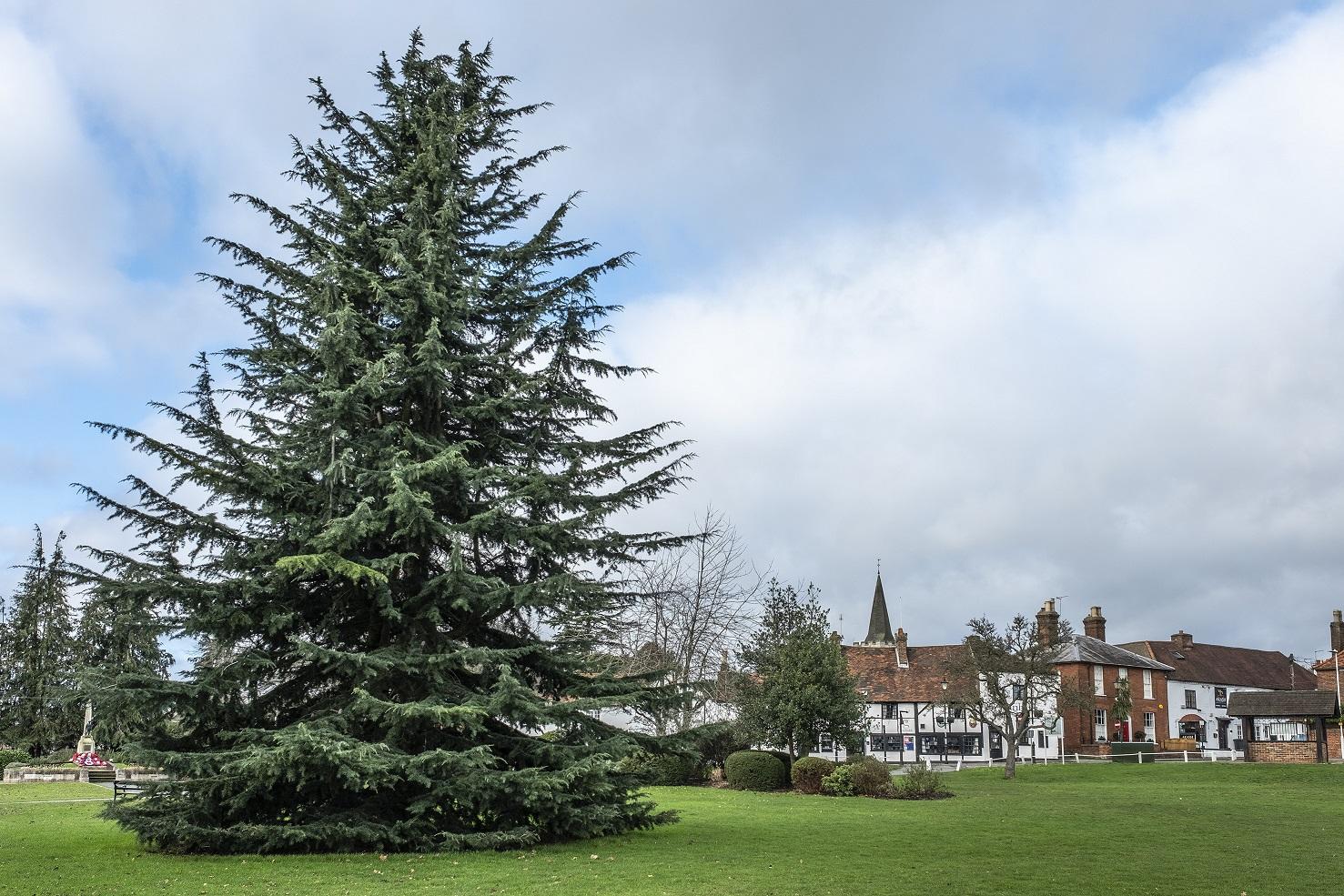 Burnham Tree and village